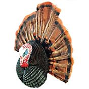 Flextone Thunder Chicken Turkey Decoy with DVD